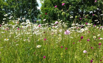 06 Planting Page Wild Flower Meadow The Cotswolds